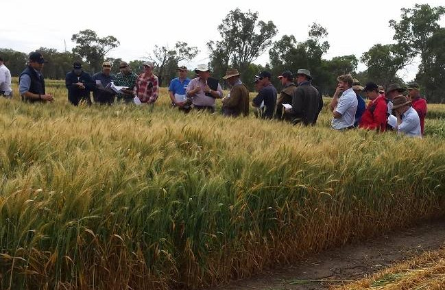 STRONG SHOWING: The annual field day and variety trials have always been well receieved by industry players.