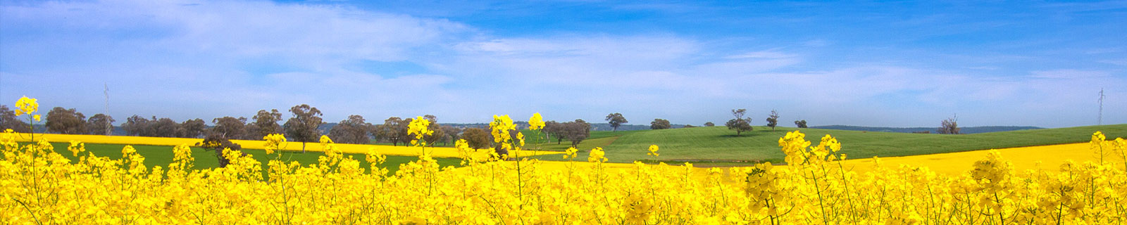 Riverine Plains broadacre farming systems in north-east Victoria and southern New South Wales